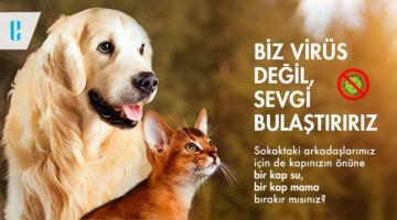 Korona Günlerinde Sokak Hayvanlarını Unutmayın!